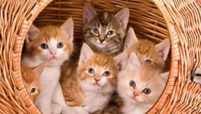 Cat Dream Meanings and Interpretation