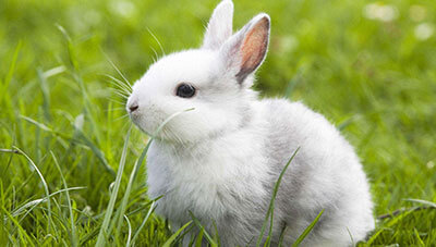 Dream Interpretation about Rabbit, Meanings of Rabbit in Dream