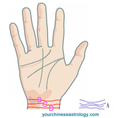 Bracelet Line in Palmistry, Rascette Palm Reading, Wrist Lines