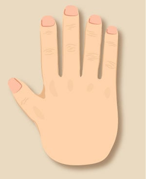 types of hand in palmistry hand shape personality career love
