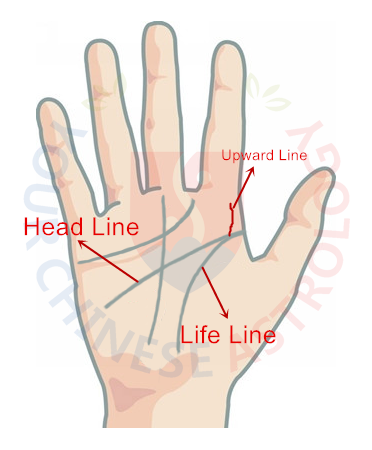 Upward Line at the Beginning of Life and Head Line